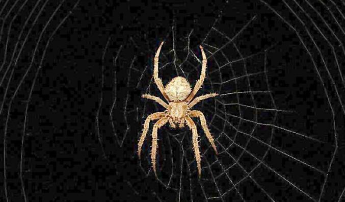 哪些方法能快速提高蜘蛛的抓取频率?